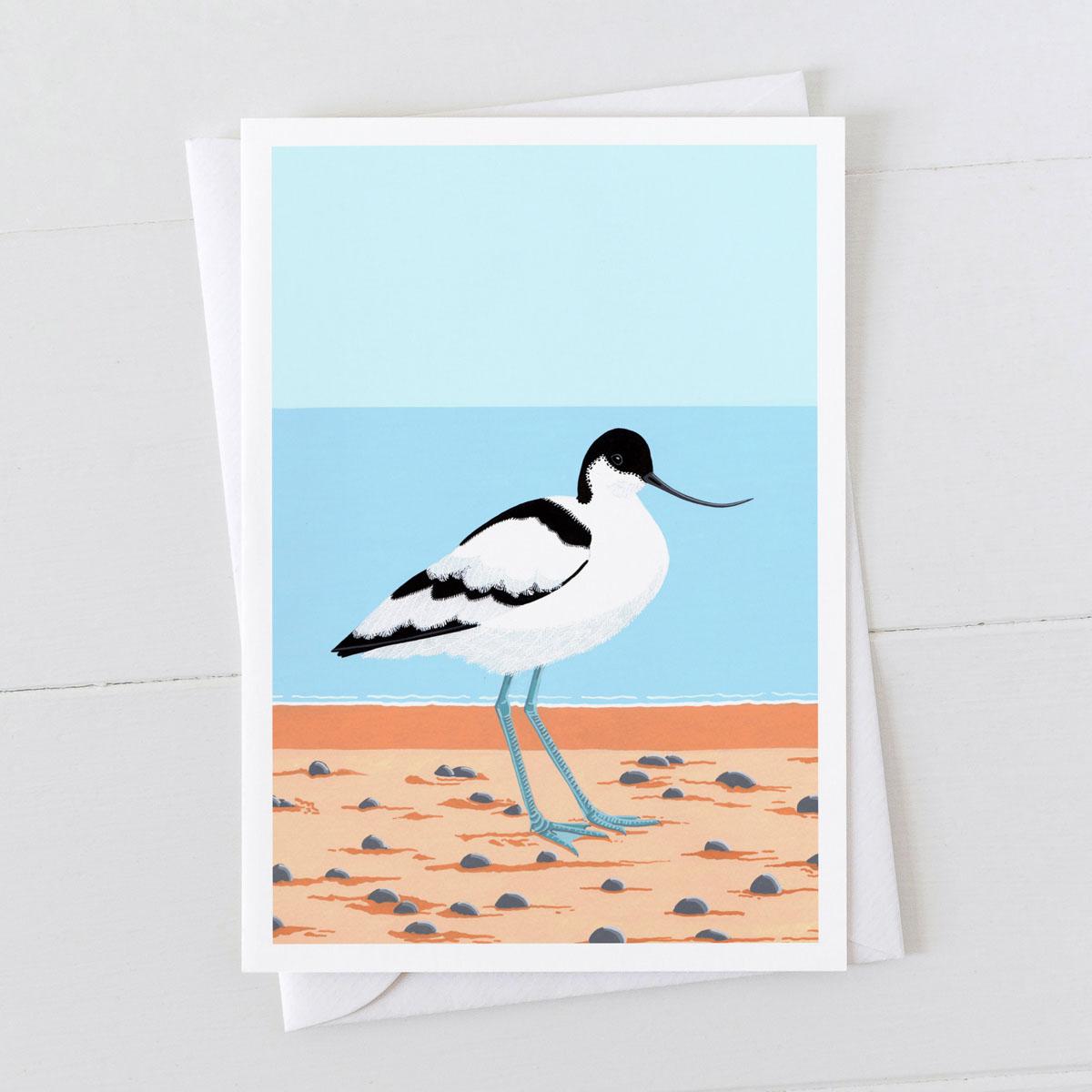 Avocet Coastal Bird