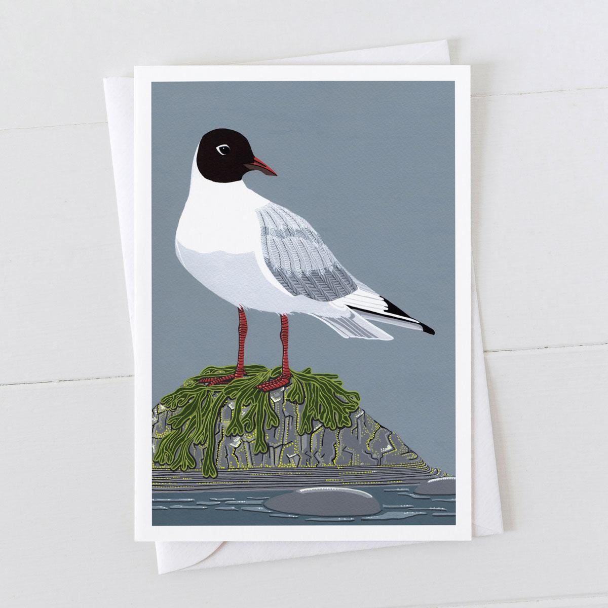 Black Headed Gull Greeting Card