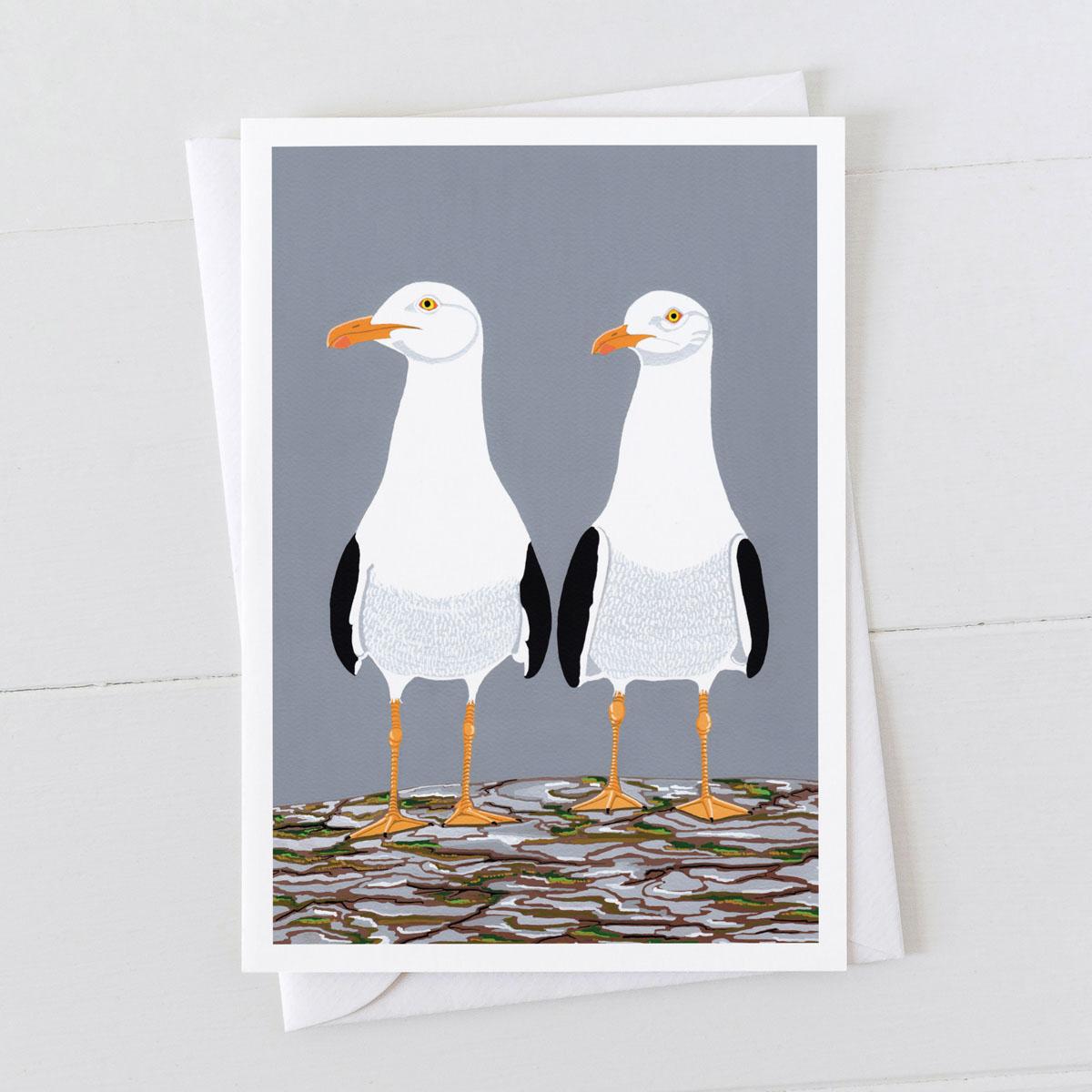 Herring Gulls Coastal Bird