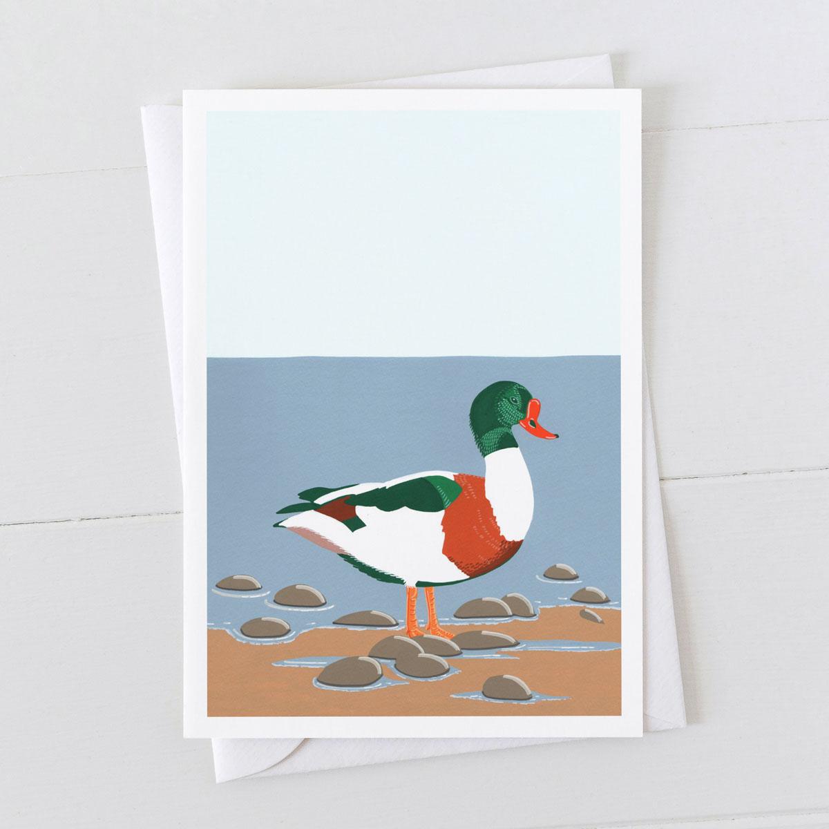 Shelduck Coastal Bird