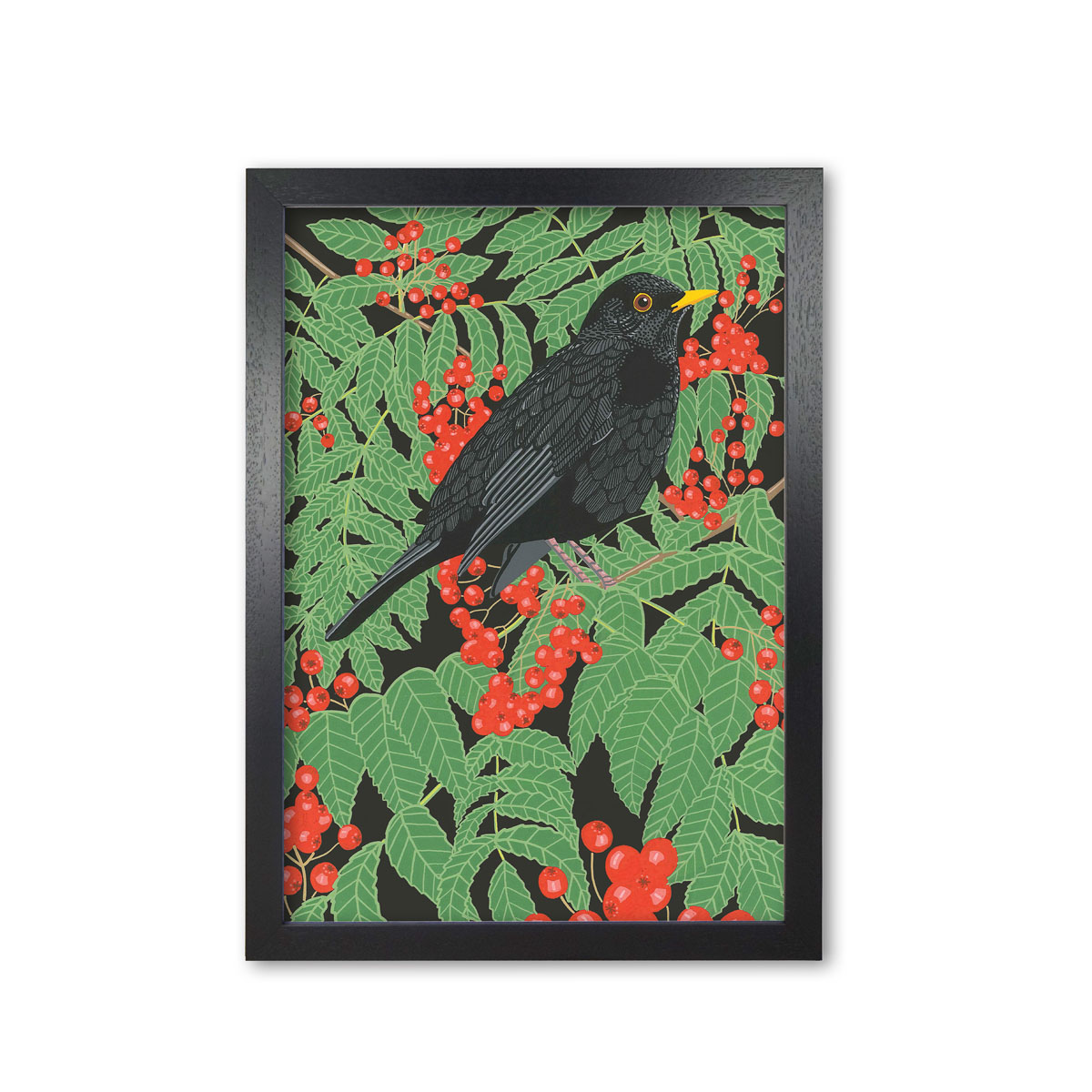 Blackbird Garden Bird Mounted And Framed Print