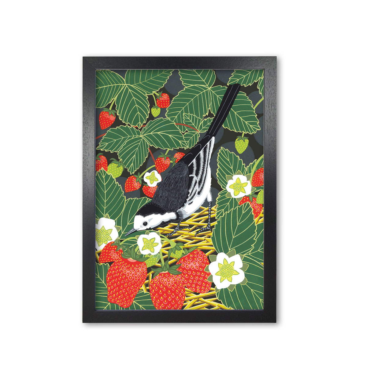 Pied Wagtail Garden Bird Mounted And Framed Print