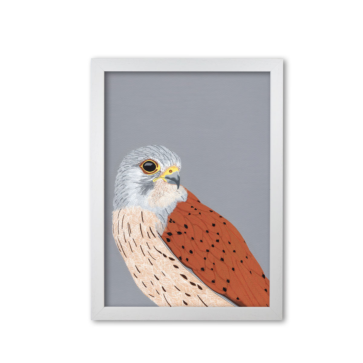 Kestrel Bird Head Mounted And Framed Print