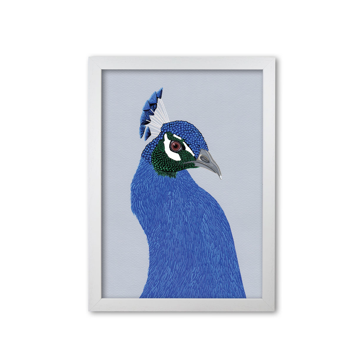 Peacock Bird Head Mounted And Framed Print