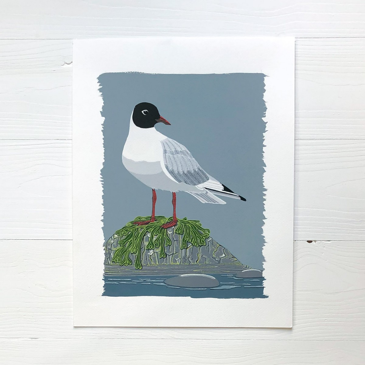Black Headed Gull Sea Bird Original Gouache Painting By Bird The Artist