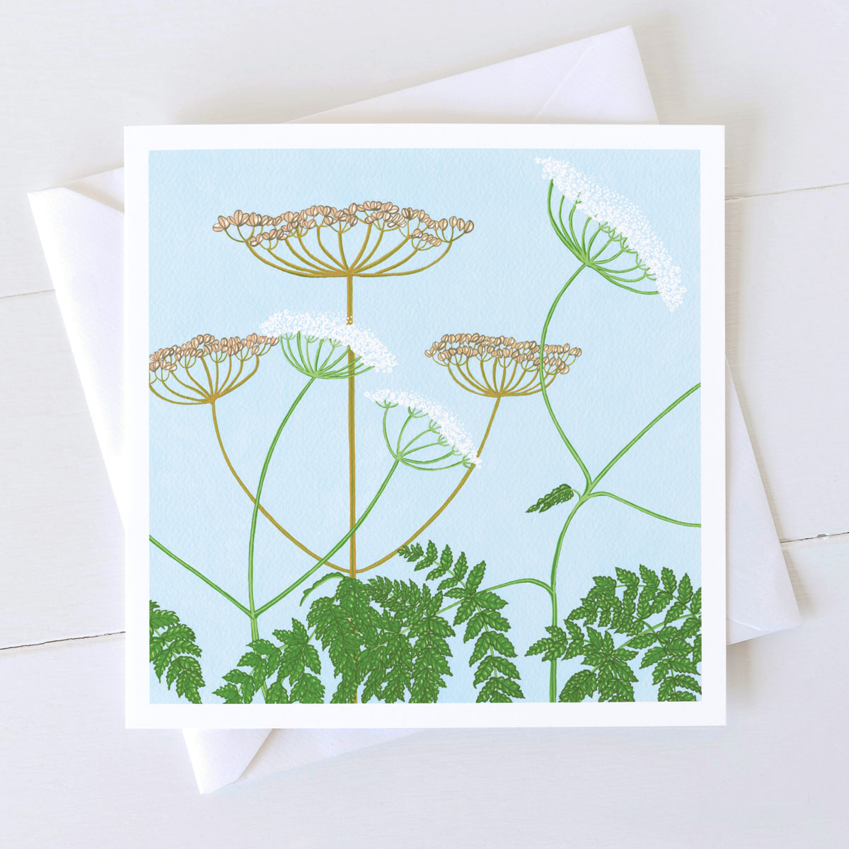 Cow Parsley Wild Plant Greeting Card