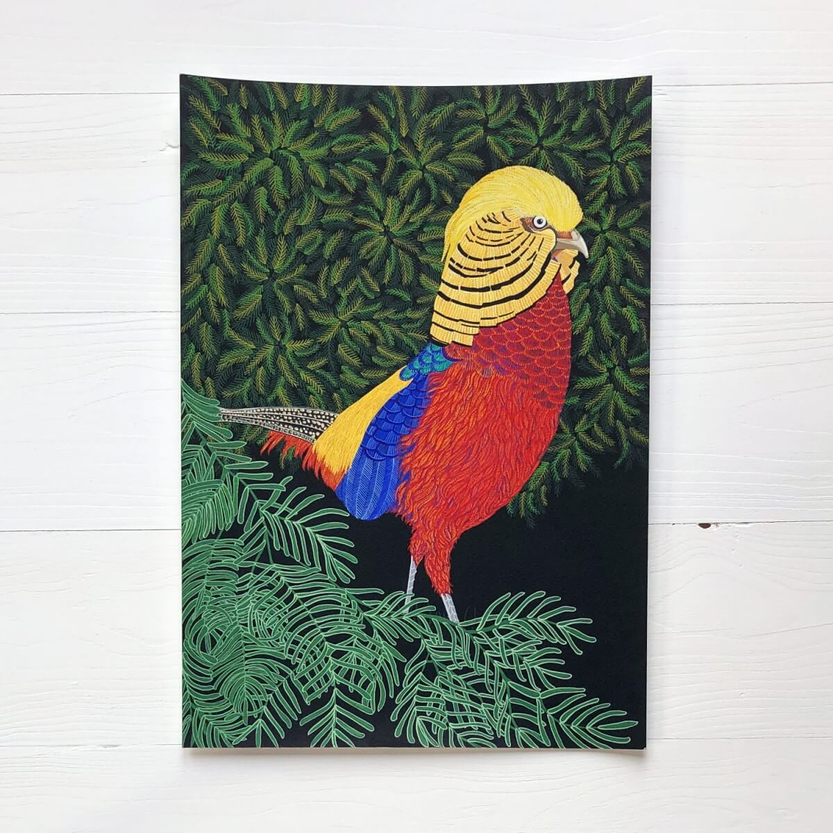 Golden Pheasant original Gouache Painting By Bird